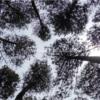 Menyegarkan Diri di Hutan Pinus Asri Mangunan Dlingo
